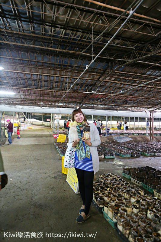 新社景點|台中阿亮香菇園 採香菇DIY體驗活動.香菇生態導覽.喝新鮮白木耳汁