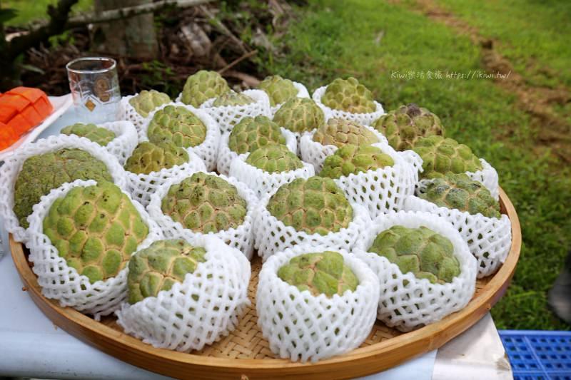 台東好吃釋迦太陽很多|大目釋迦來當小果農享受釋迦採果樂