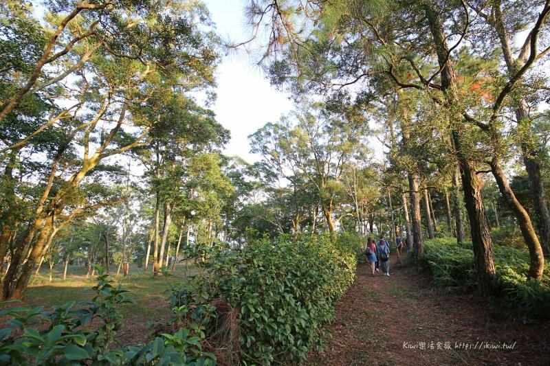 苗栗三義自在森林農地| 享受自然林蔭隱密居住環境,讓你自在呼吸 輕鬆擁有靜謐氛圍!