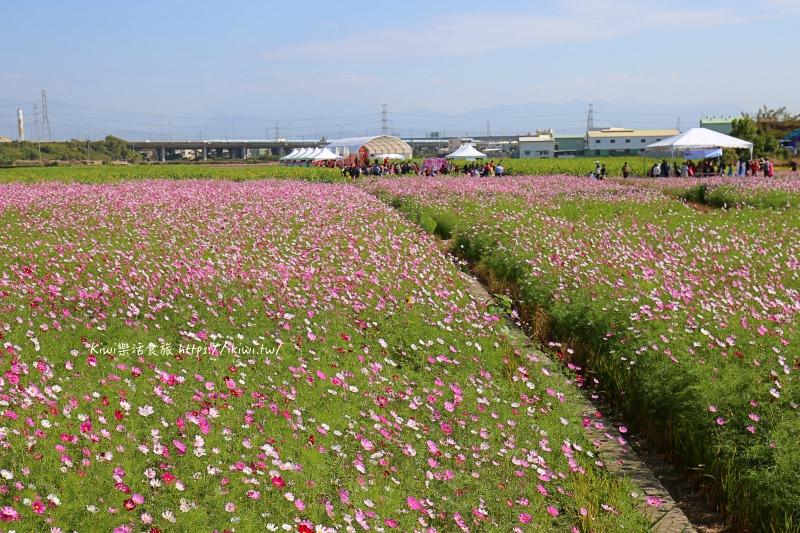 彰化市限定景點花海|農濃半線 幸福花饗音樂祭,圍繞在波斯菊花海、向日葵花海與油菜花田