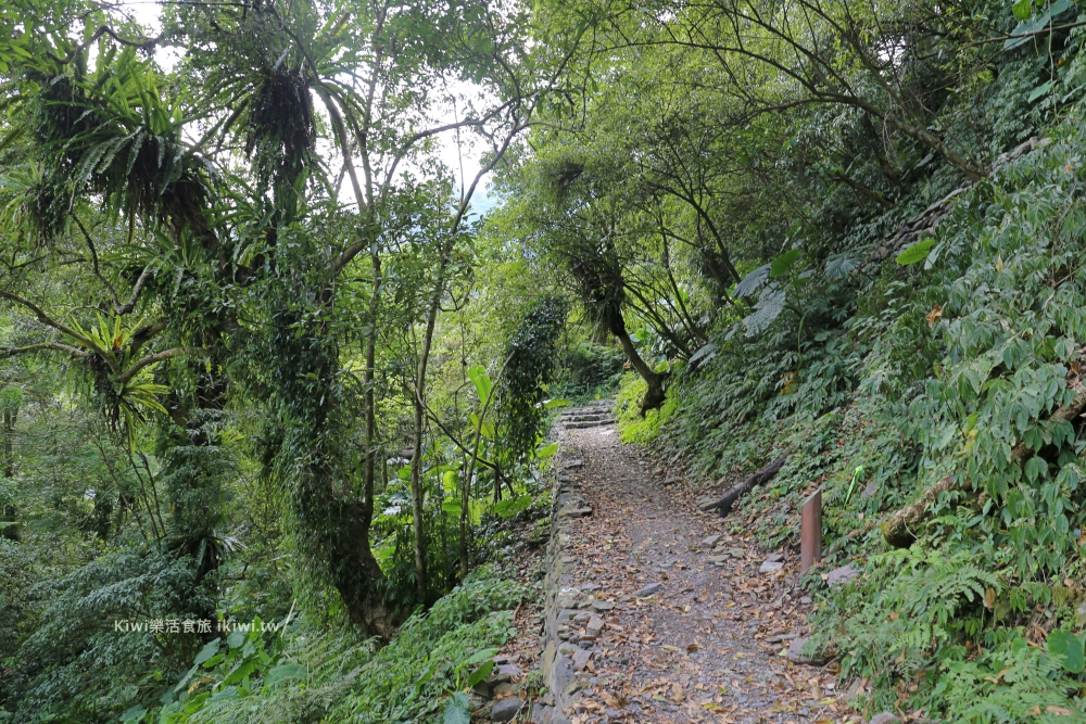 宜蘭鳩之澤步道來回