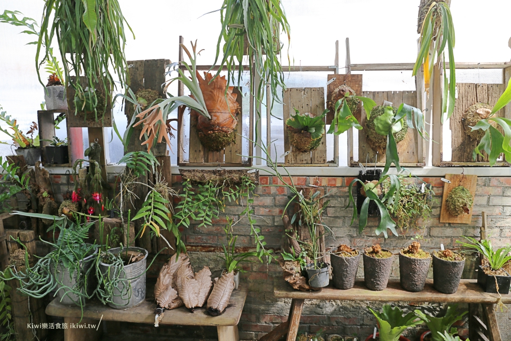 嘉義梅山空氣圖書館植物植栽
