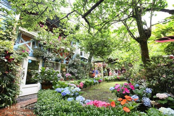 南庄山芙蓉咖啡藝廊  苗栗景點遺落在繽紛花園的繡球花,靜謐賞繡球花必訪去處