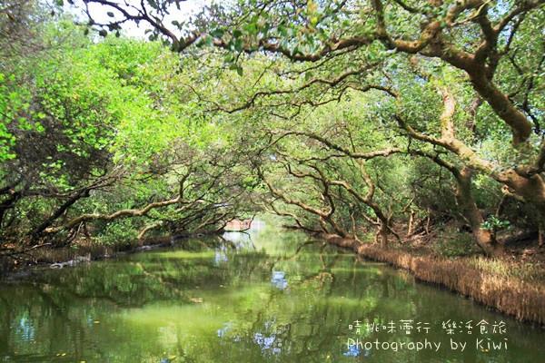 台南景點|安南四草紅樹林綠色隧道樹林倒映如亞馬遜河流域(親子遊/台南一日遊)