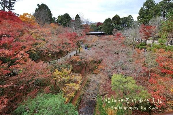 【京都景點】東福寺とうふくじ賞楓葉 (交通JR奈良線)