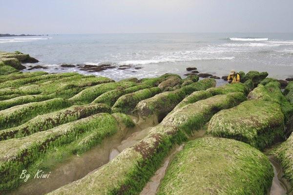石門景點推薦|老梅綠石槽綠油油的海藻浪打在海蝕溝上動人的畫面讓人驚艷