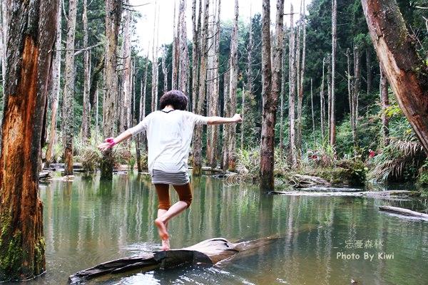 【南投鹿谷景點】鹿谷秘境忘憂森林
