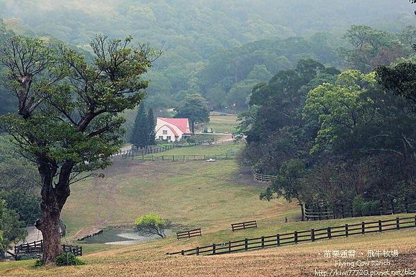 【苗栗】來個大自然擁抱天:飛牛牧場
